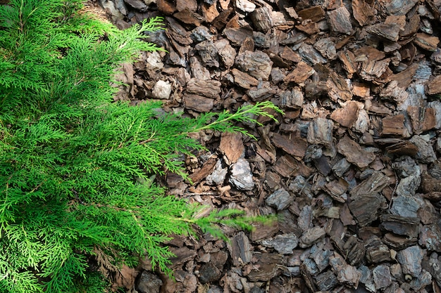 Biological mulching wood alpine bark.
