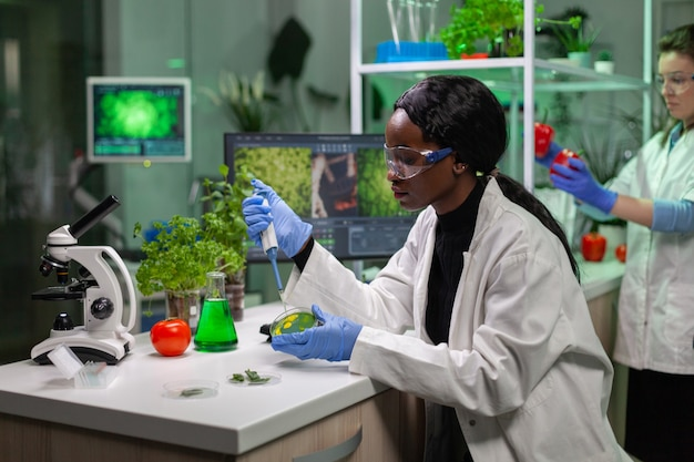 Biologist taking genetic solution from test tube with micropipette putting in petri dish analyzing gmo of sapling working in biological laboratory