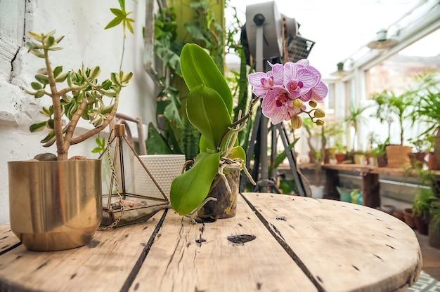 バイオフィリアトレンドスタイル。鉢植えの観葉植物がある中庭の詳細。蘭が咲いています。