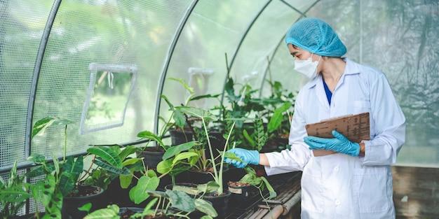 생물학 과학 실험실, 유전 기술, 과학 생태 연구, 식물 성장 샘플 실험 검사 테스트에서 일하는 생명 공학 연구 과학자
