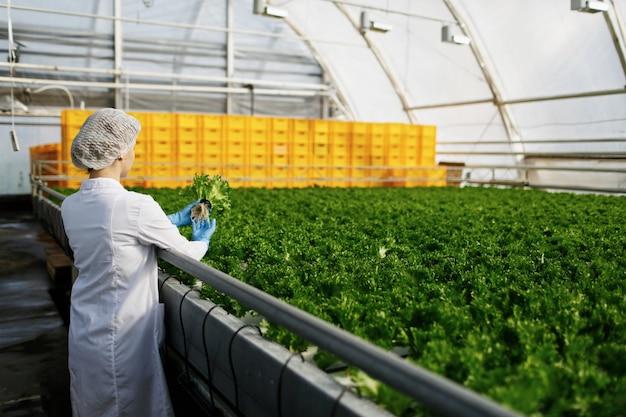 Женщина-инженер-биотехнолог, исследующая растения на наличие болезней