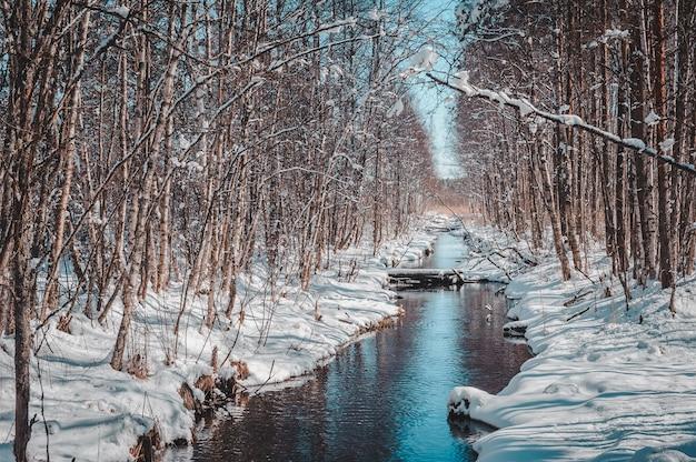 Береза вдоль речки похожа на аллею.
