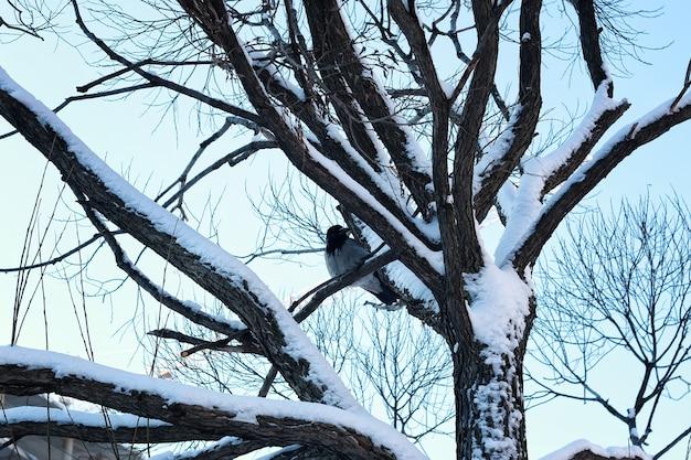 白樺の裸の冬の鳥