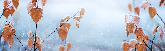 Березовые ветки с сухими листьями во время снегопада, зимний фон, панорама