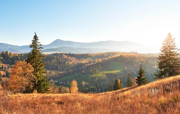가을 시즌 동안 화창한 오후에 자작 나무 숲.