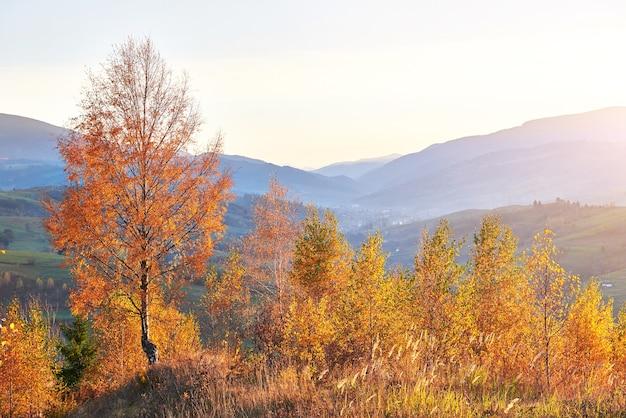秋の晴れた日の晴れた日の白樺の森。