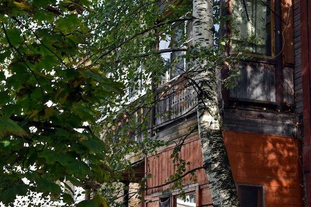 자작 나무는 집 마당에서 자랍니다.