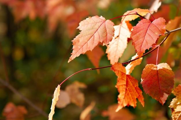 가 숲에 대 한 자작나무 잎