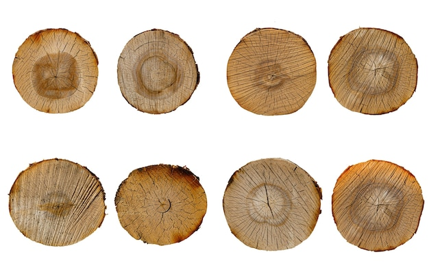 자작나무 로그 컷 세트 흰색 배경에 고립입니다. 고품질 사진