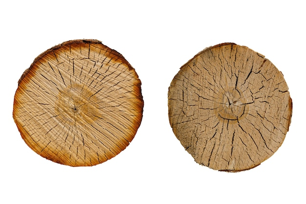 Birch log cut set isolated on white background. high quality photo