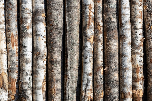 Birch logs in rows. the trees are stacked with stacks. timber. high quality photo