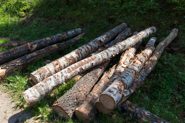 白樺の丸太は、木材の収穫中に積み重ねられ、樹皮と損傷のある木材