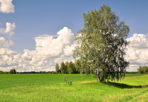 Береза на зеленом поле