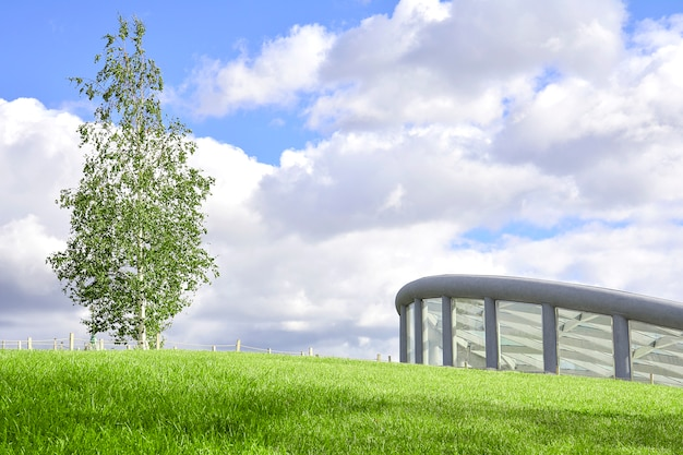 Birch stands on a green lawn against the sky next to a modern building.