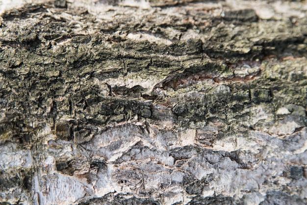 バーチの木の樹皮をクローズアップテクスチャ