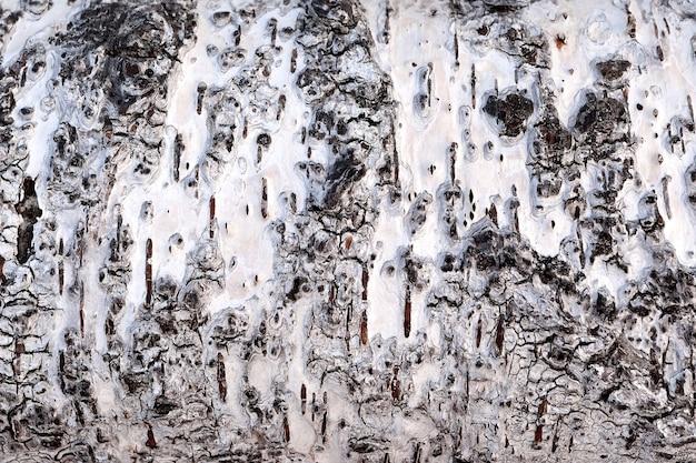 Текстура коры березы для фона