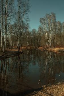 川の白樺の森の反射