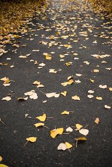 白樺の木の葉が通りに落ちた
