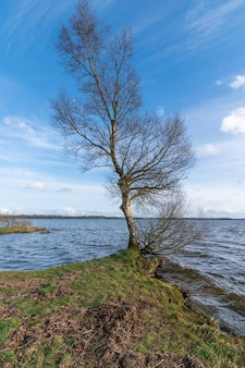 Береза на берегу озера с голубым небом и бурной водой. ранняя весна в ирландии.