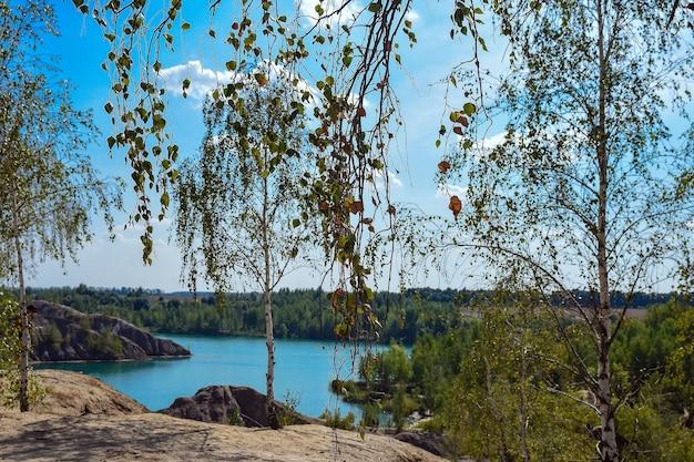 夏の明るい日に湖のほとりに若い葉を持つ白樺の木自然の風景