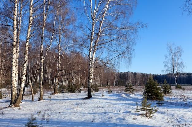 Березовые перчатки в зимний день