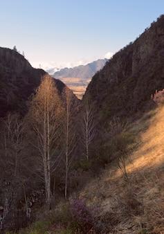 Березы в золотом свете в темном горном ущелье склон и горы