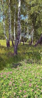 下に花が咲く夏の森の白樺。 2枚の合成画像。