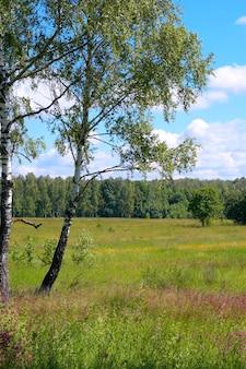 背の高い草と卵が下にある夏の森の白樺。