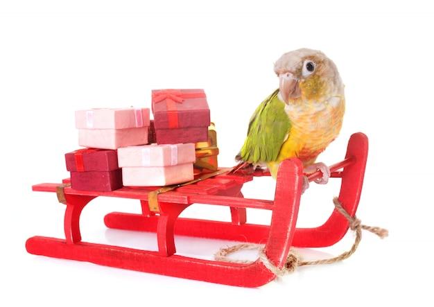 Птица и рождество