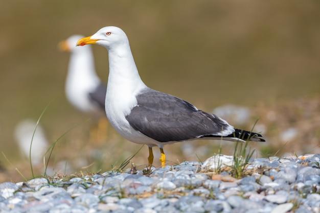 Bird animal beak and seagull