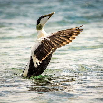 Bird animal on water