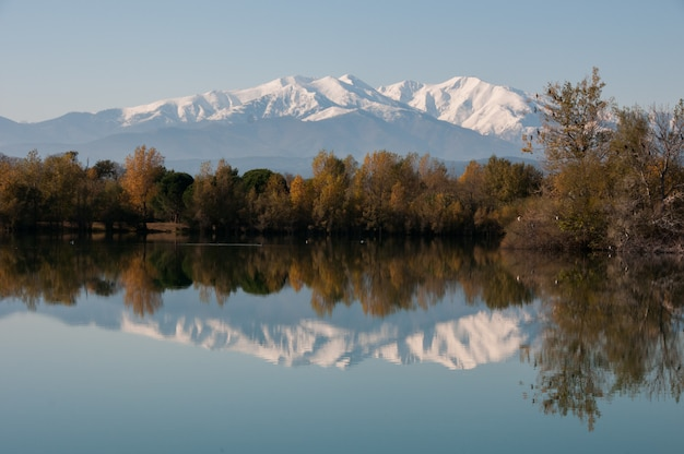 Bird canigou beauty beautiful france country