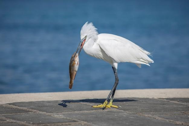 港で鳥を捕まえる魚