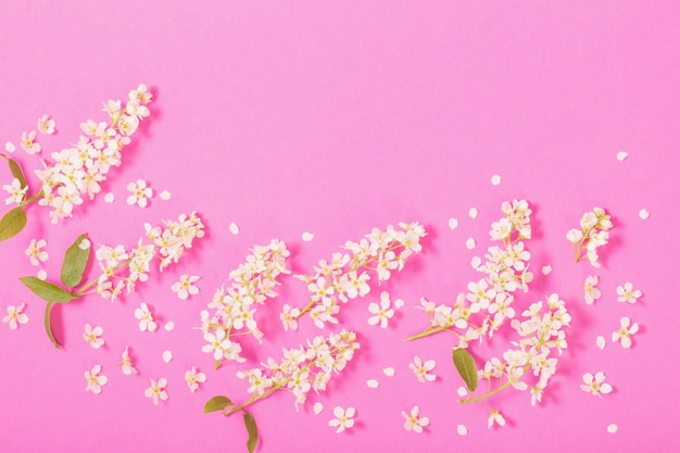 분홍색 종이 표면에 새 체리
