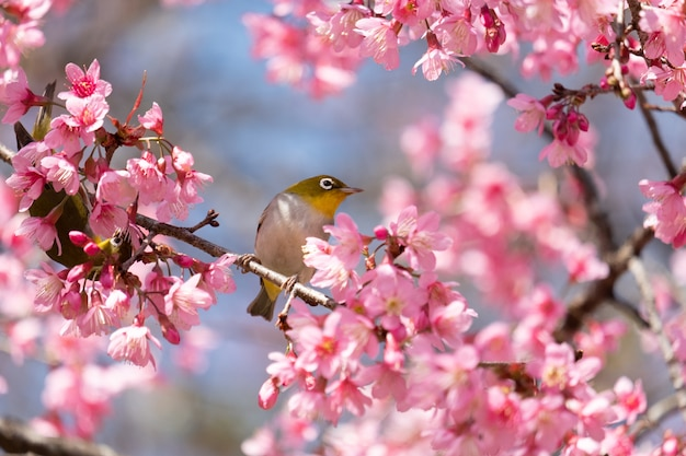 Bird on a cherry tree branch