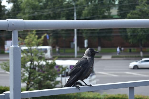 Bird on a city street