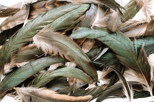 鳥の羽のパターン