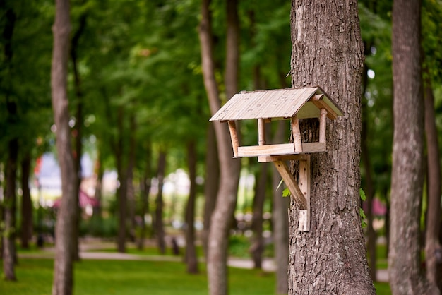 Bird feeder on a tree in the park.