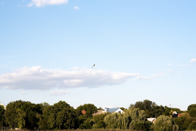 The bird flies against the blue sky