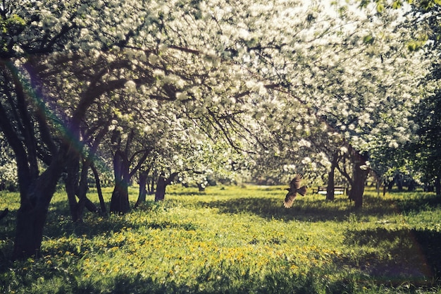 새는 공원의 꽃이 만발한 나무 사이로 날아간다