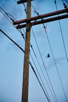 Птица пролетает над несколькими телефонными линиями в ясный день