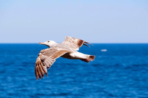 Птица летит над морем, расправив крылья
