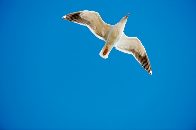 Bird in flight against blue sky, low angle view