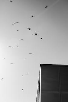 Bird flock flying