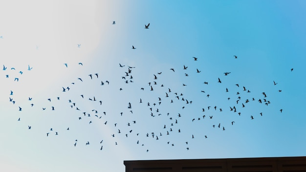Bird flock flying