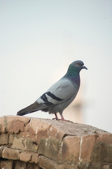 Uccello sul pavimento