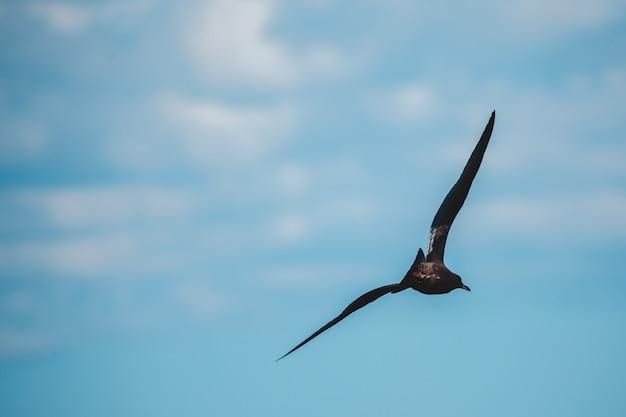 Bird flying over blue sky