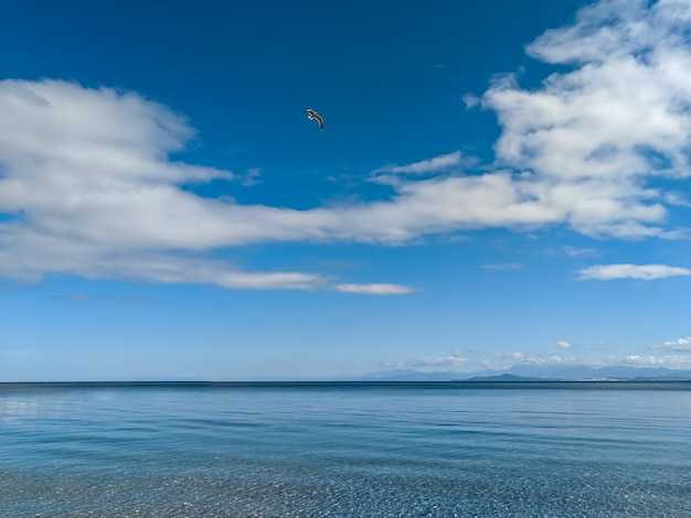 Bird flying over calm sea and blue sky