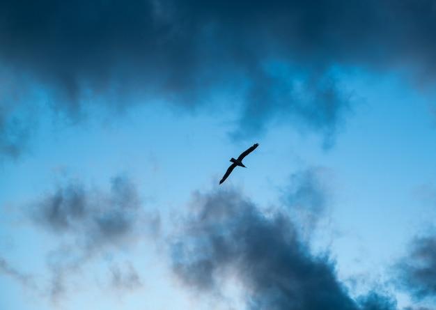Птица летит в темных облаках вид на силуэт летящей чайки птица летит над морским полетом