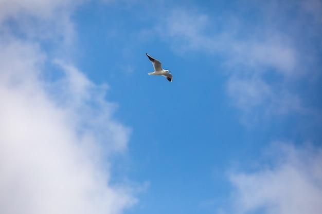 自由の概念の鳥の飛行seagull孤立した空のシンボル